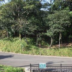 平川動物公園移動手段園路整備工事(その2)